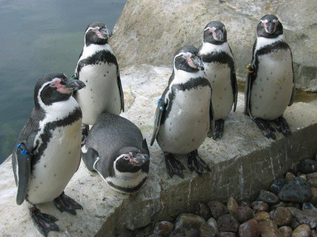 sea-animals-1363025